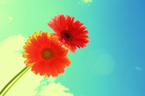 20150429-200_muses-Imatge_Forever_and_Always_Two_Bright_Flowers_On_Blue_Sky_D_Sharon_Pruitt_CC2.0_Attribution-Text_No_ho_se_Tere_SM