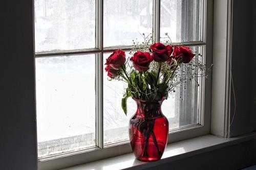 20151130-200_muses-roses_in_a_windowliz_west_CC2.0_Attribution-Text_Interrogants_de_vapor_d_aigua_Tere_SM