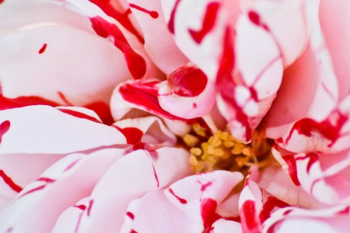 20150724-200_muses-Imatge_Strawberry_Sauce_quattrostagioni_CC2.0_Attribution-Text_Dinar_en_tres_actes_SM