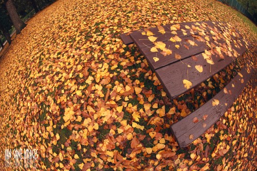 20151019-200_muses-Imatge_My_Autumn_World_Has_Been_No_Picnic_Ian_Sane_CC2.0_Attribution-Text_Centenars_de_milers_Tere_SM